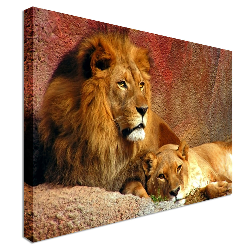 Animal Lion and Lioness Resting  Canvas Wall Art Picture Print