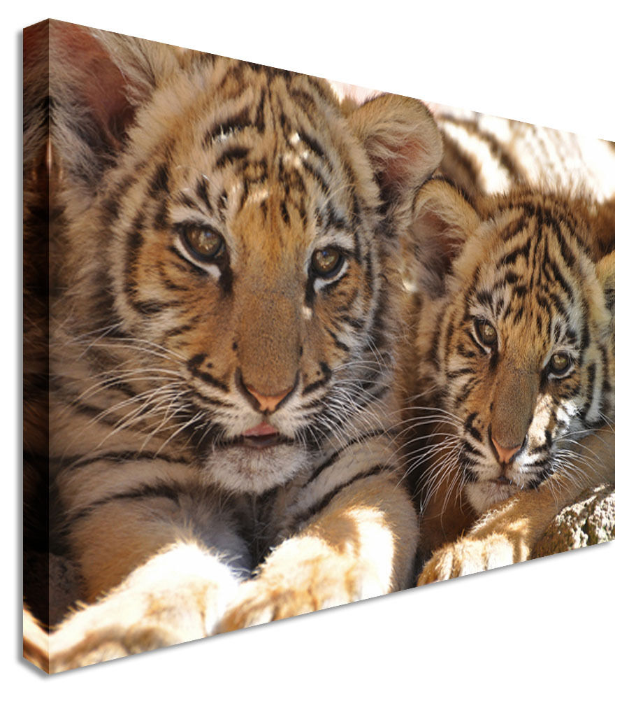 Tiger Cub Chill Canvas Canvas Wall Art Picture Print