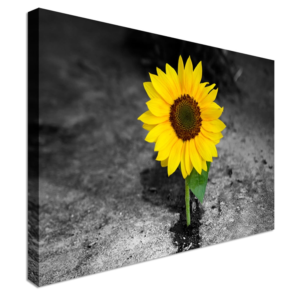 Sunflower In Darkness - Flower Canvas Canvas Wall Art Picture Print