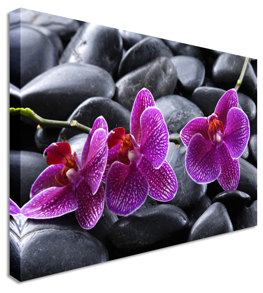 Two Pink Orchid Floral Flower Canvas Wall Art Picture Print