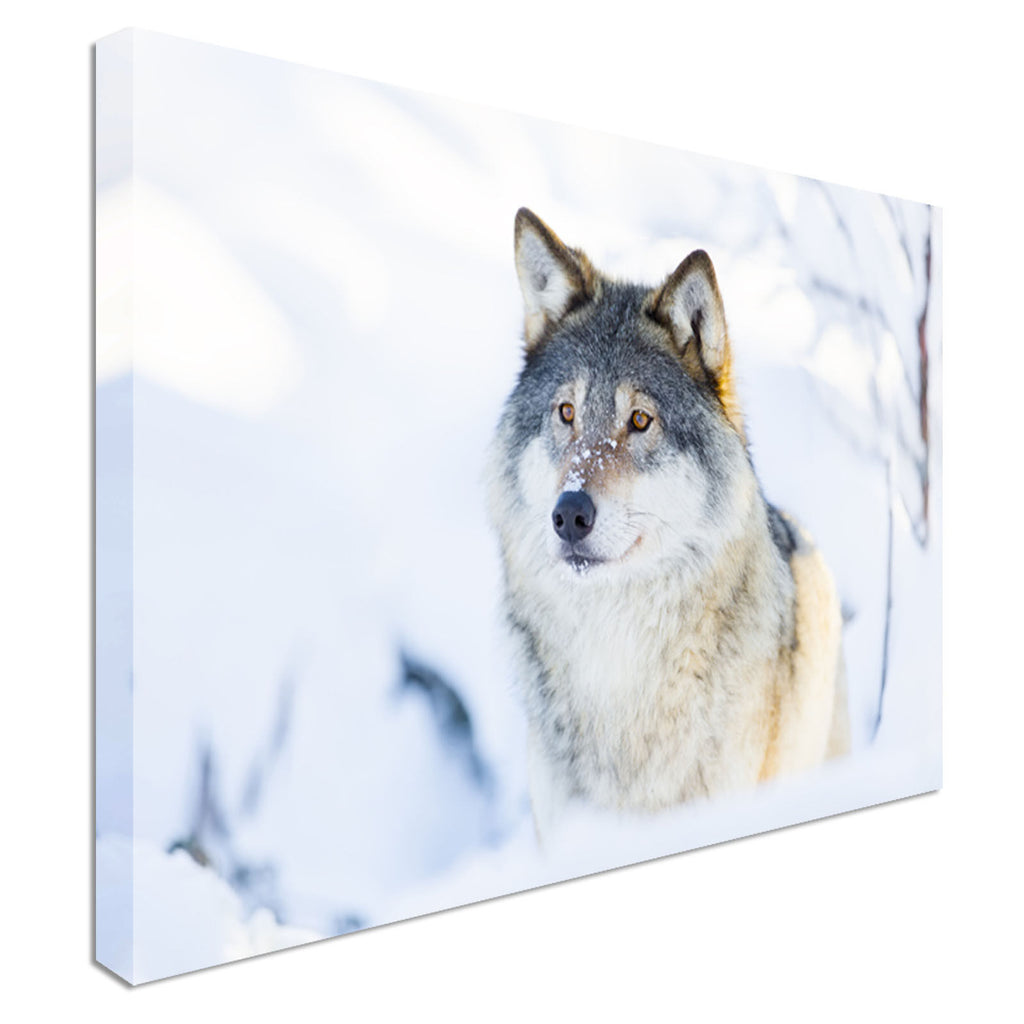 Snow wolf hunting Canvas Wall Art Picture Print