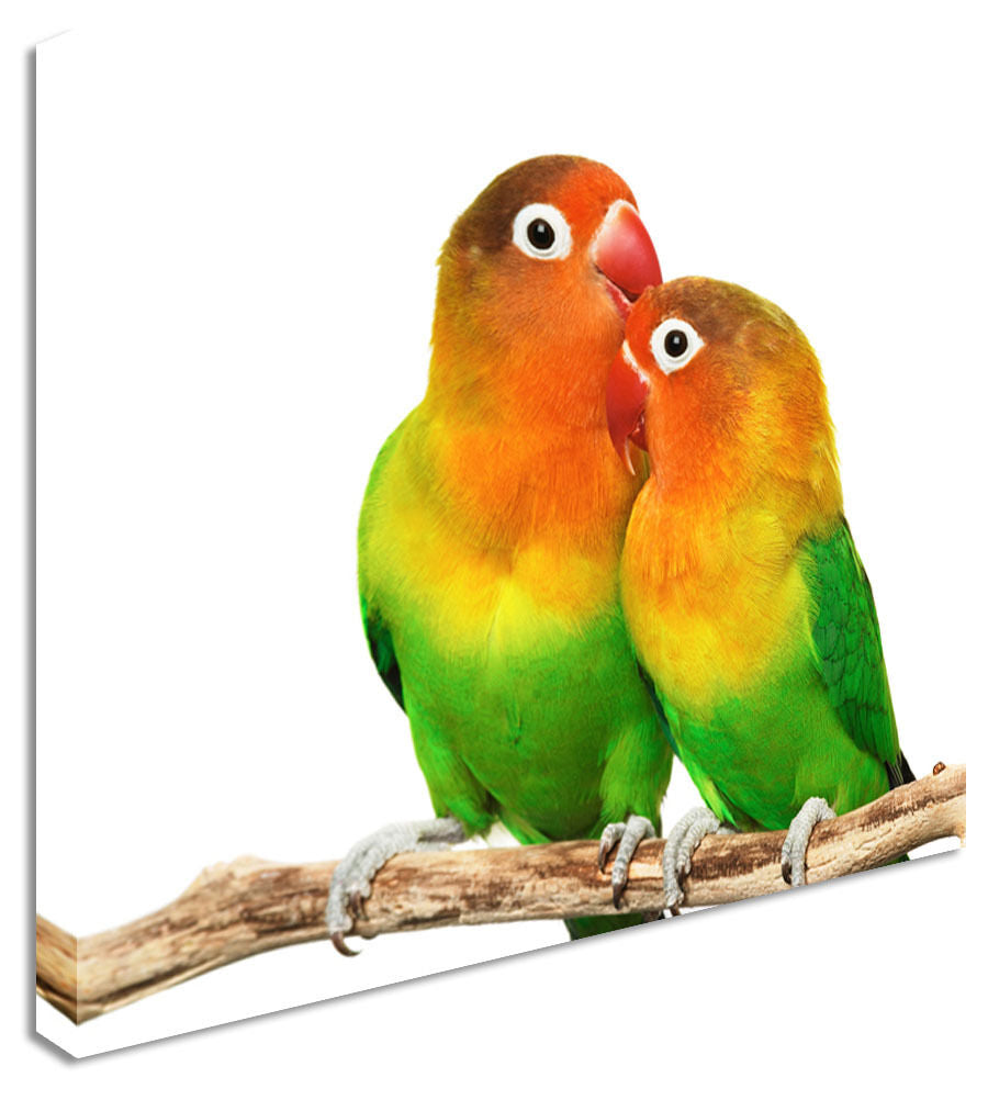 Wall Art Large Animal Love Birds Canvas Pictures