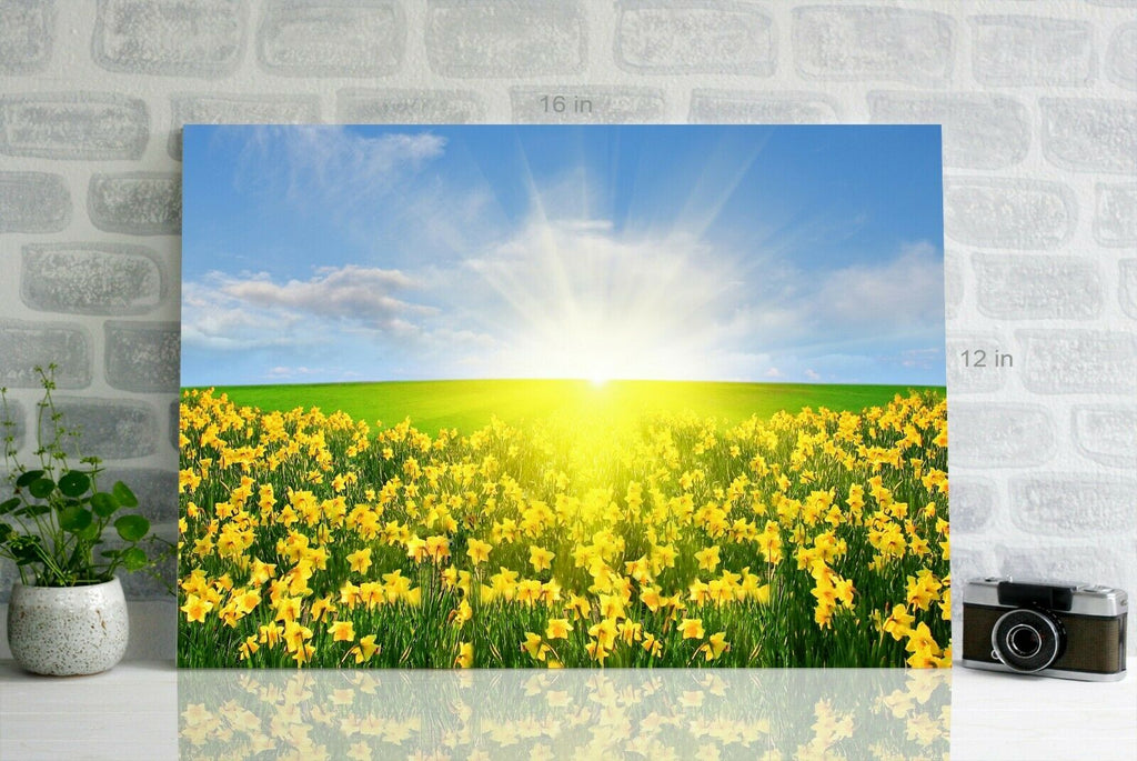 Daffodil Field Yellow -  Canvas Wall Art Picture Print