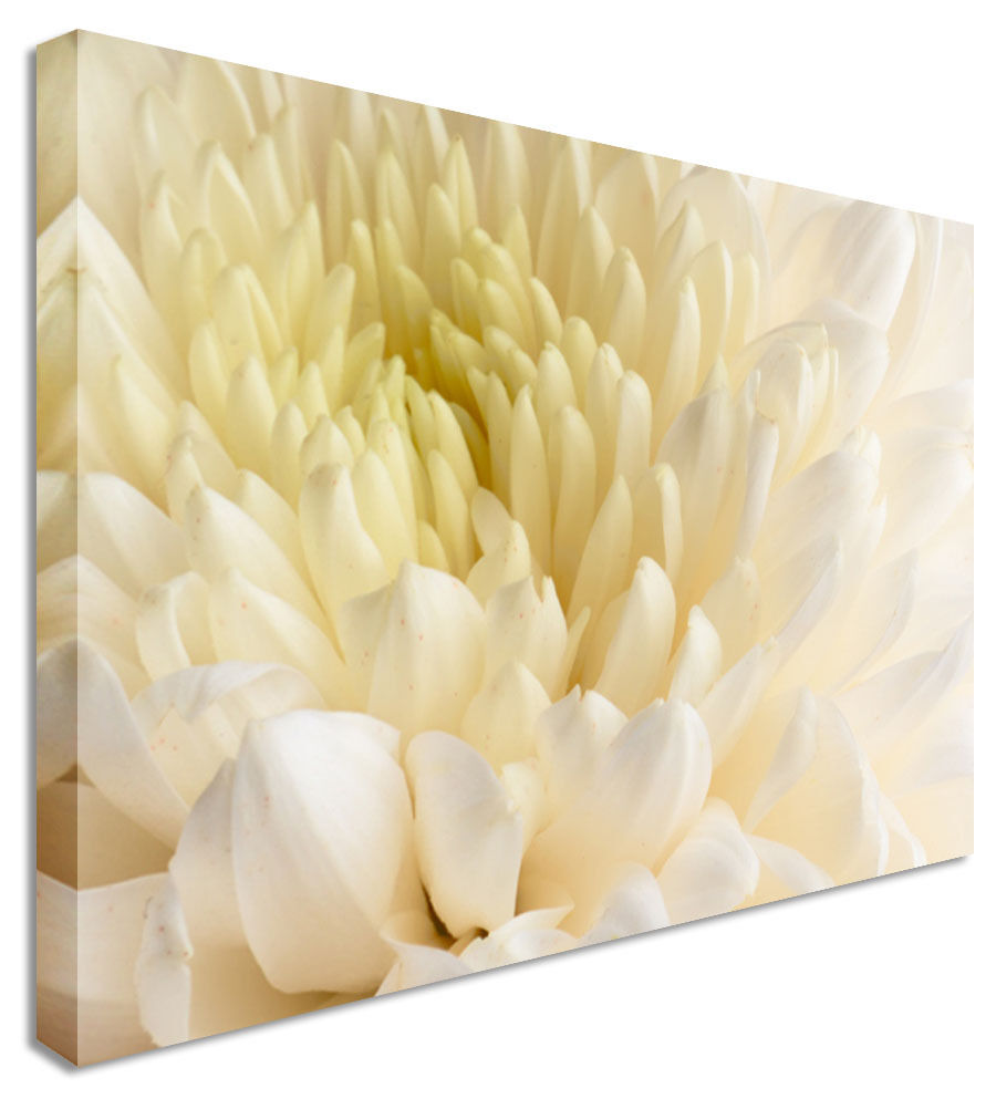 DAHLIA White Close Up - Floral Flower Canvas Wall Art Picture Print