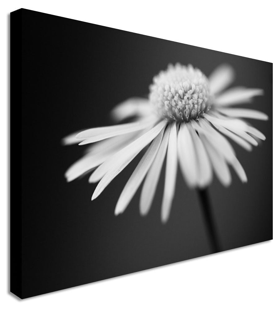 Black & White Daisy Floral Flower Canvas Wall Art Picture Print