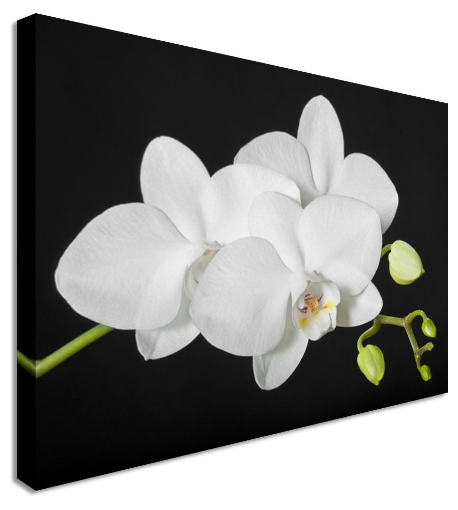 White Orchid on Black Floral Flower  Canvas Wall Art Picture Print