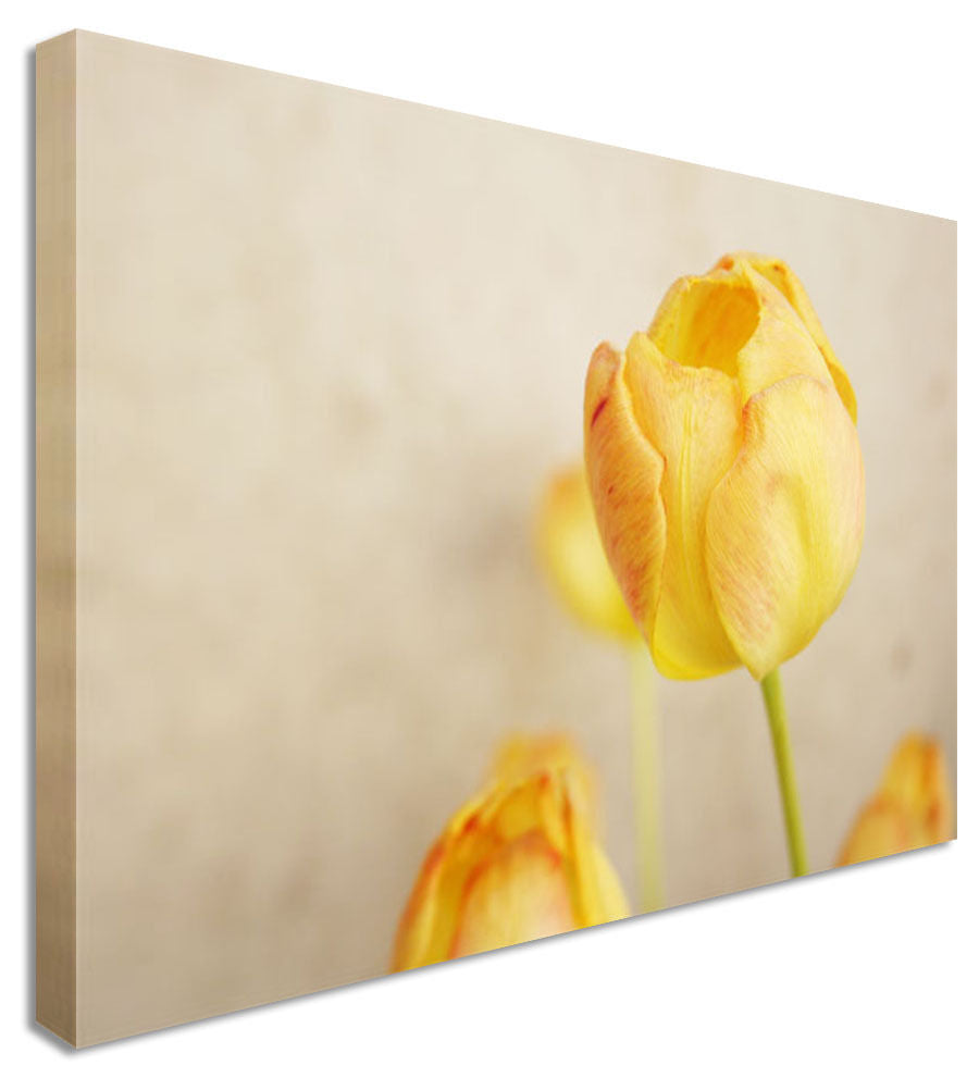 Yellow Bloom Floral Flower Canvas Wall Art Picture Print