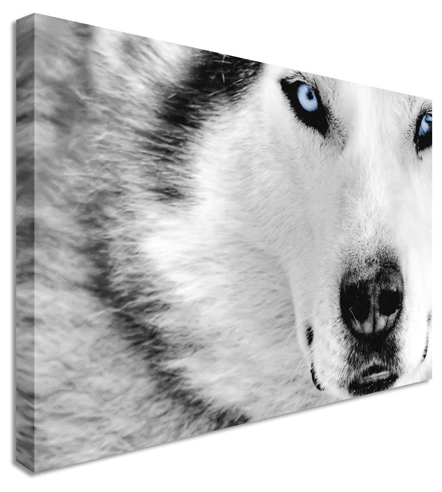Large Animal Wolf Hunt B&W Canvas Wall Art Picture Print