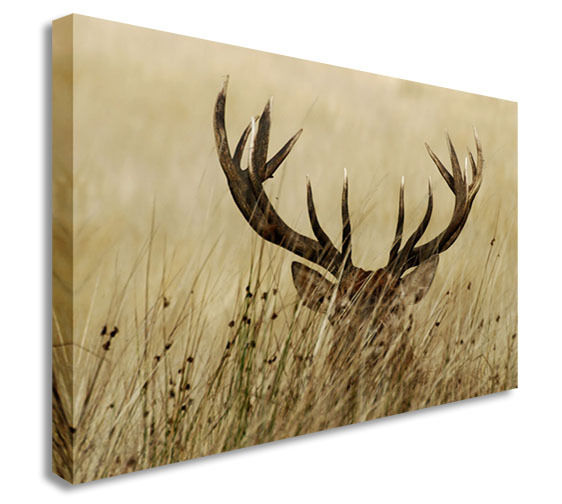 Deer Hiding In The Fields Antlers Wall Picture Canvas Wall Art Picture Print