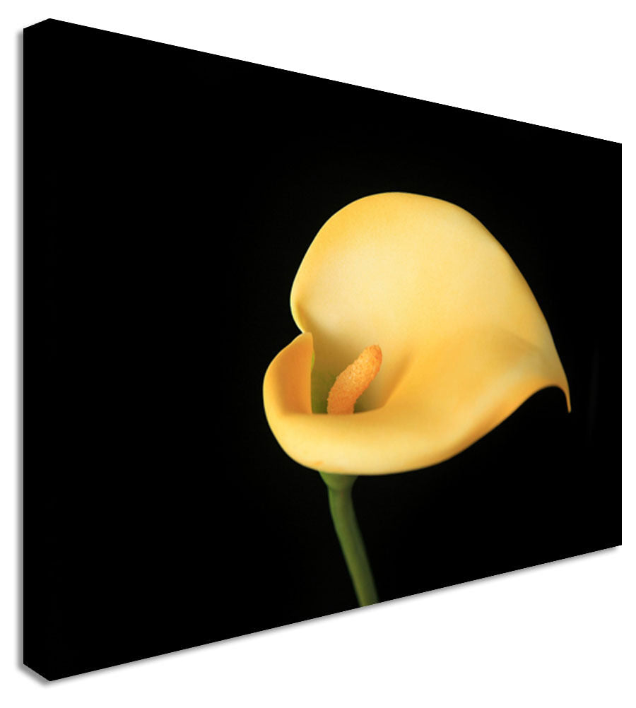 Yellow Calla Lilly Flower - Canvas Wall Art Picture Print