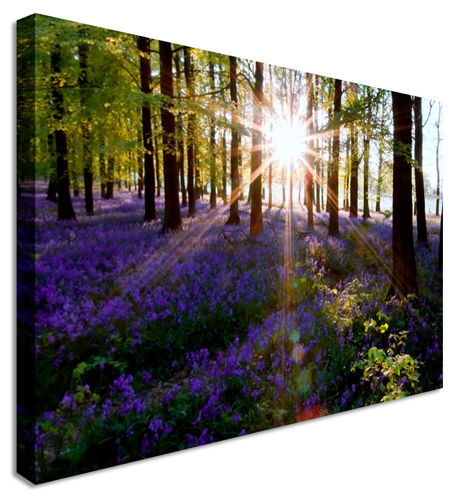 Sunset In Lavender Woods Canvas Wall Art Picture Print