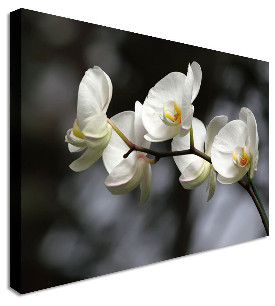 White Orchids Floral Flower Canvas Wall Art Picture Print
