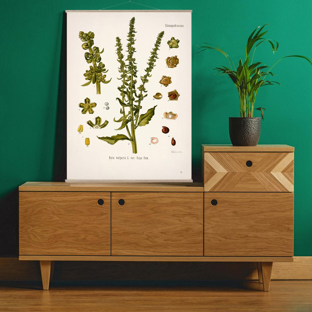 Vintage Botanical Common beet Art Print