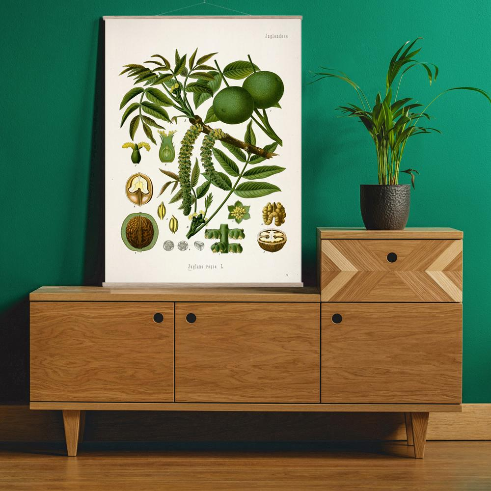 Vintage Botanical English walnut Art Print