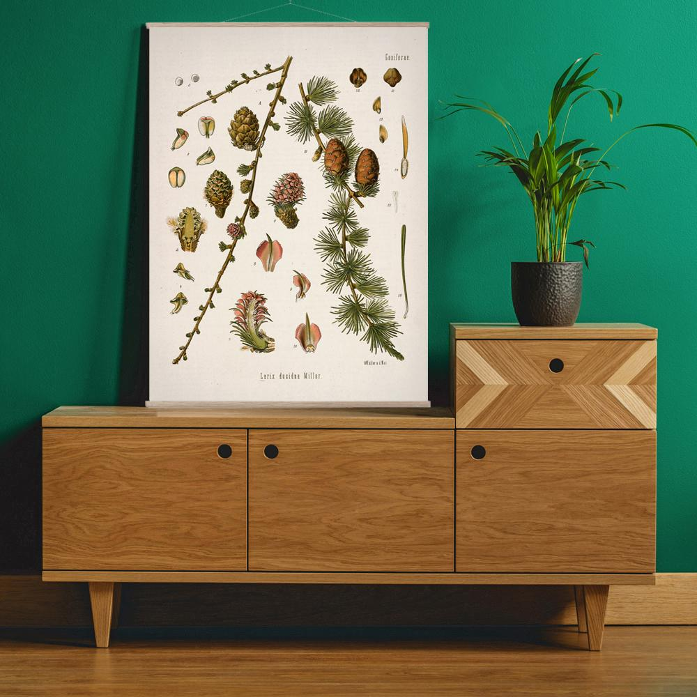 Vintage Botanical European larch Art Print