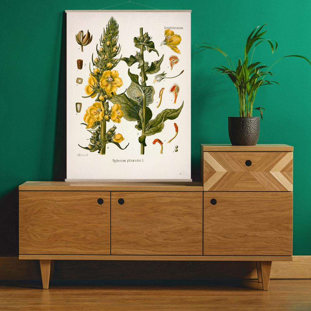 Vintage Botanical Orange mullein Art Print
