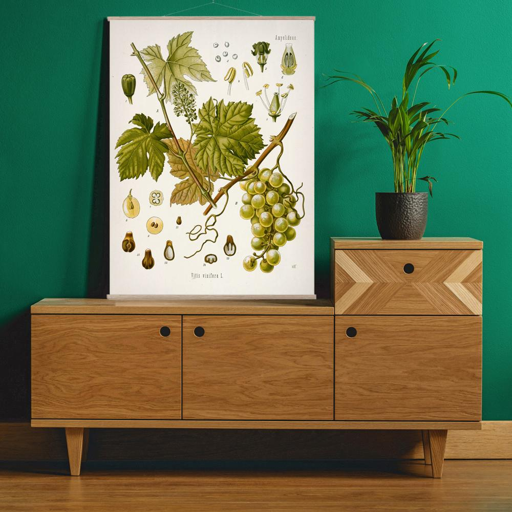 Vintage Botanical Wine grape Art Print