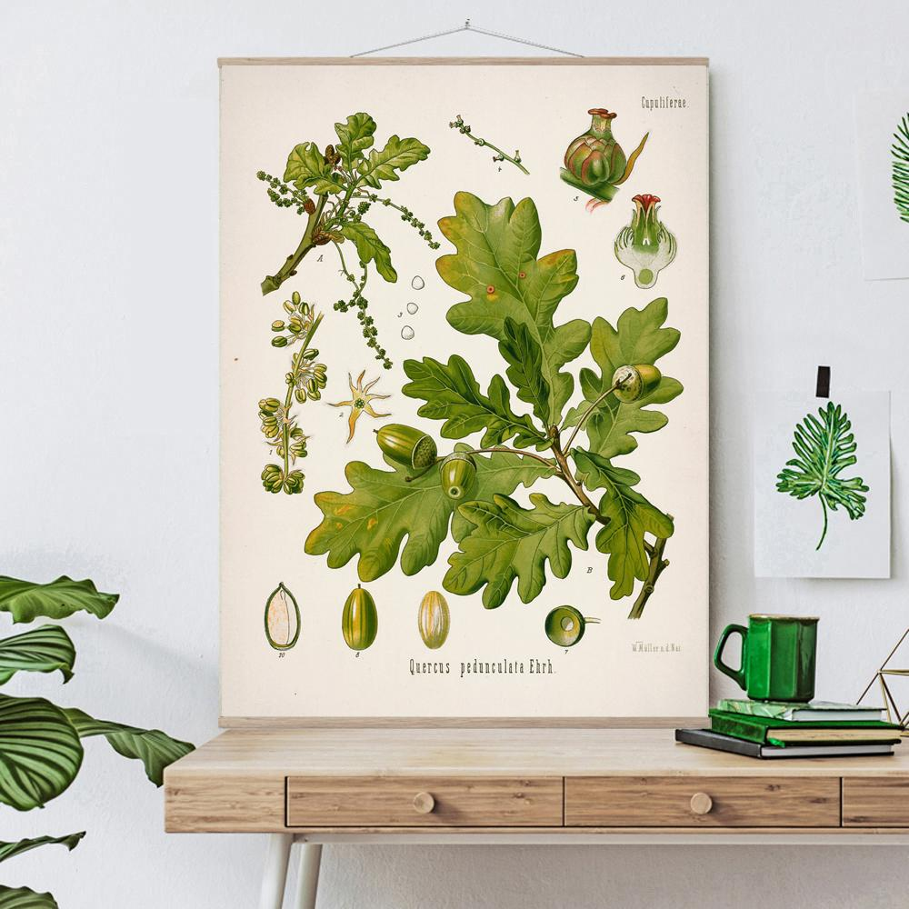 Vintage Botanical English oak Art Print