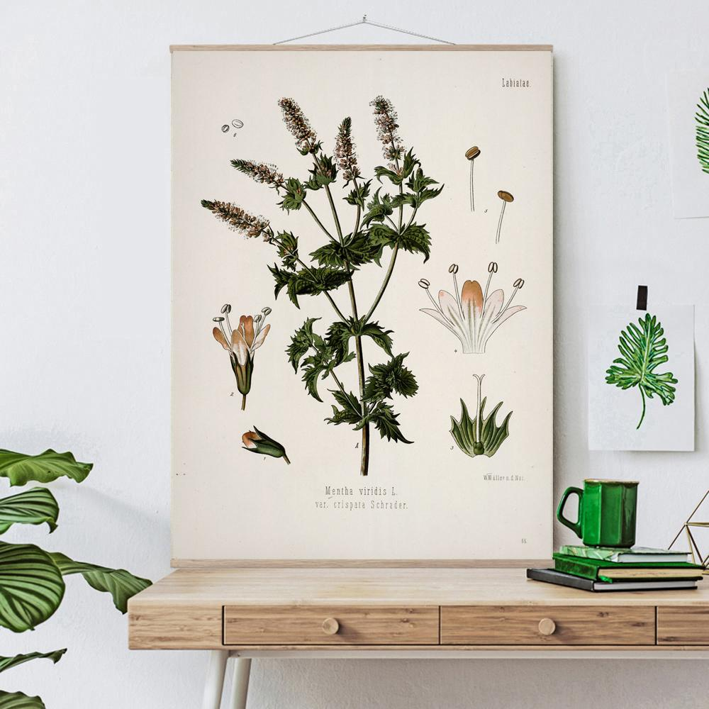 Vintage Botanical Spearmint Art Print