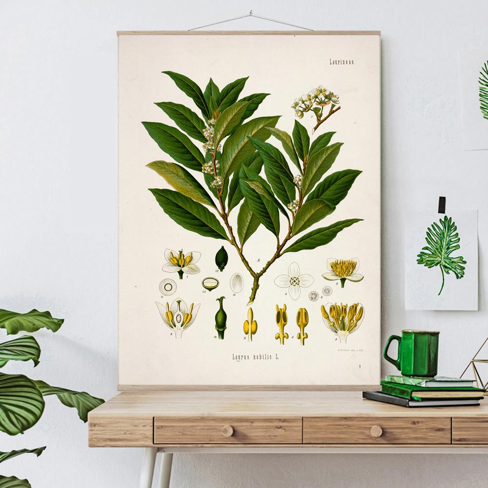 Vintage Botanical Sweet bay Art Print