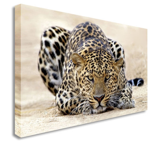 Leopard Lovely Crouching Absract Wall  Canvas Wall Art Picture Print