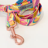 'Paint Box' Dog Lead