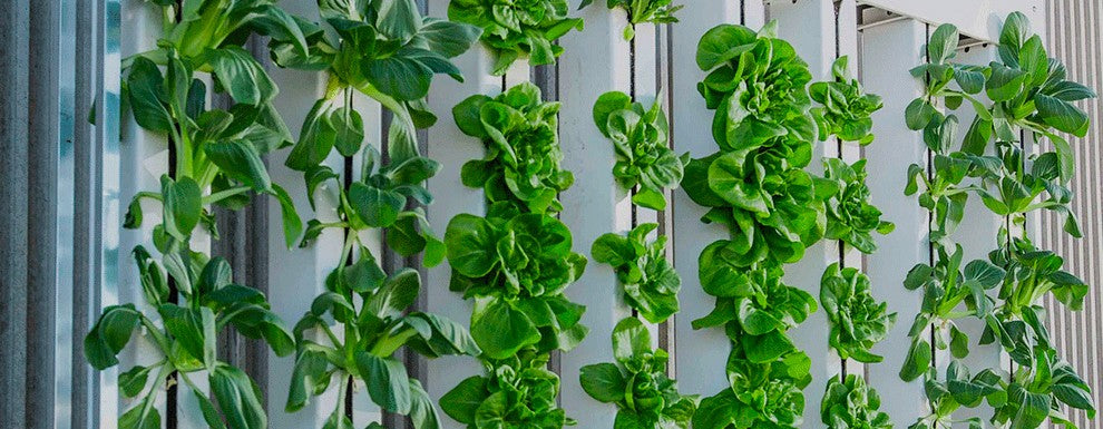 Vertical Hydroponic Towers