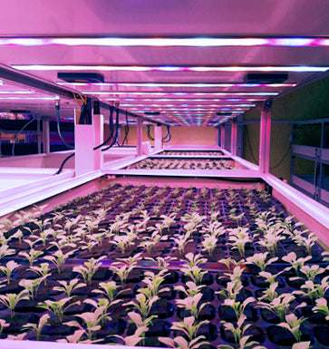 City Farmer Hydroponic Multi-shelves System