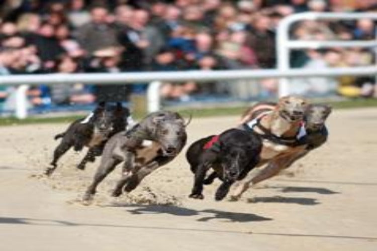 Brighton, Greyhound Racing & 2 Course Meal