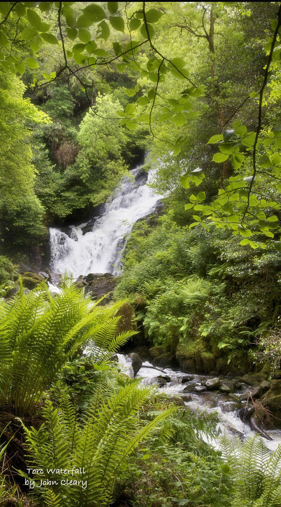 TORC WATERFALL SPRING - The Quality Framing Company & Imaging Services