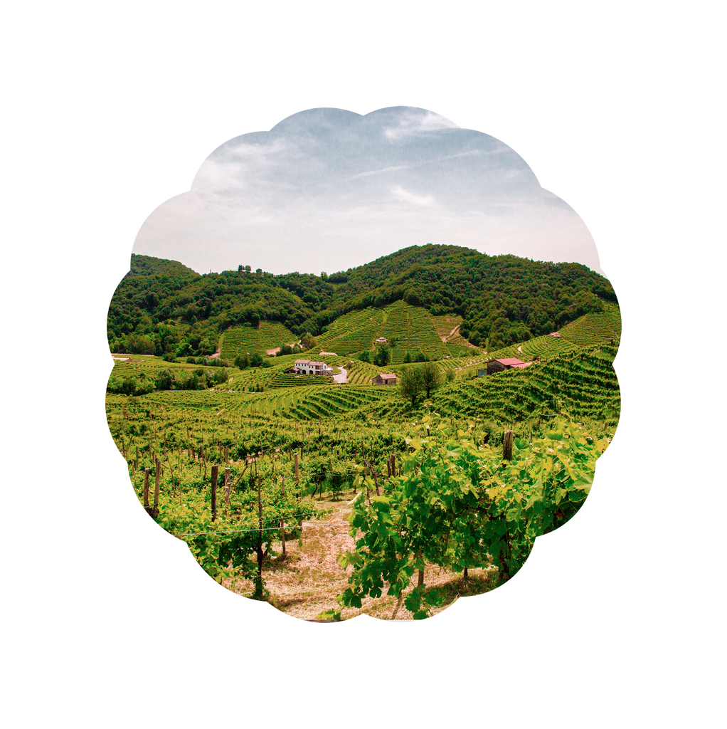 Pale Fox Prosecco Vineyards
