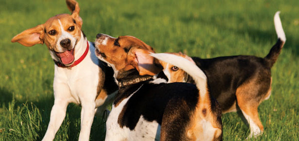 Is Your Dog Really Being Dominant?
