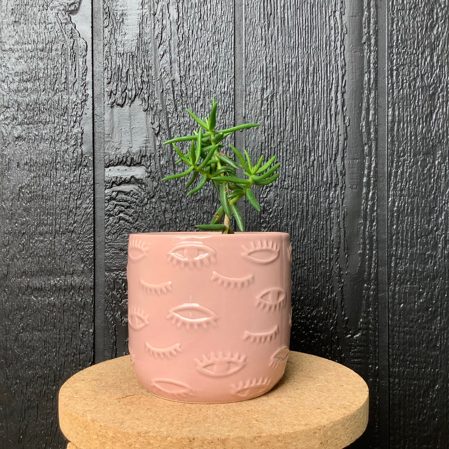 Succulent in Small Eye Planter Pink