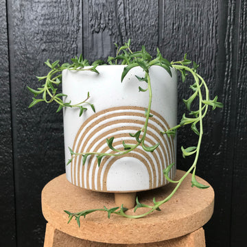 Birch Pot Small Chalk with String Of Dolphins