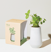Load image into Gallery viewer, Mint Planter Kit