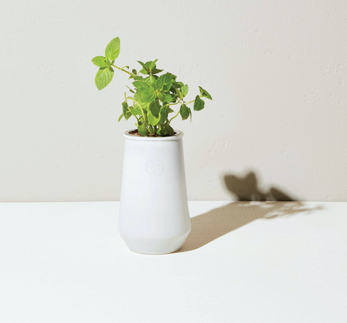 Mint Planter Kit