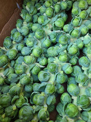 Brussel Sprouts on the Stalk