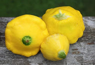 Patty Pan Squash, 10 lbs