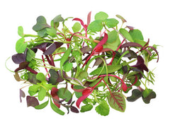 Intensity Mix Microgreens
