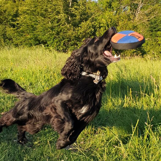 Can hyperactivity in dogs be caused by diet?