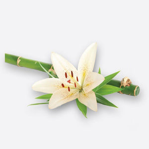 Bamboo Lily - Inoko - Large Candle Refill