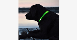 LED Dog Collar - Assorted Colors and Sizes - FREE SHIP DEALS