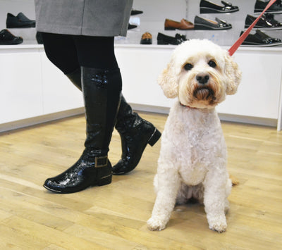 Dogs and shoes, the perfect combination!