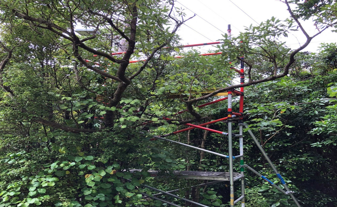 Fibreglass Scaffold for powerline work