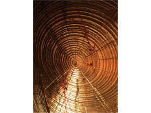 Load image into Gallery viewer, Growth Rings - Franklin Westwood