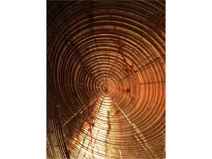 Growth Rings - Franklin Westwood