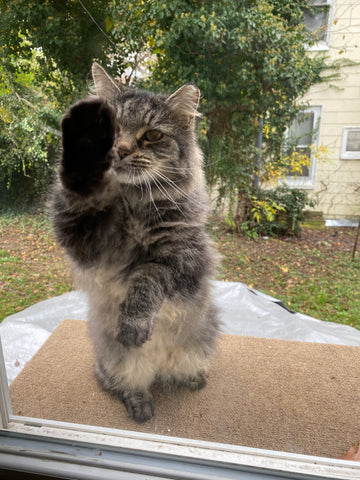 Cat with its paw outstretched against a window