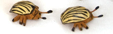 "Colorado Potato Beetles, Pair of hand-carved - 3/8"" / Size Small"