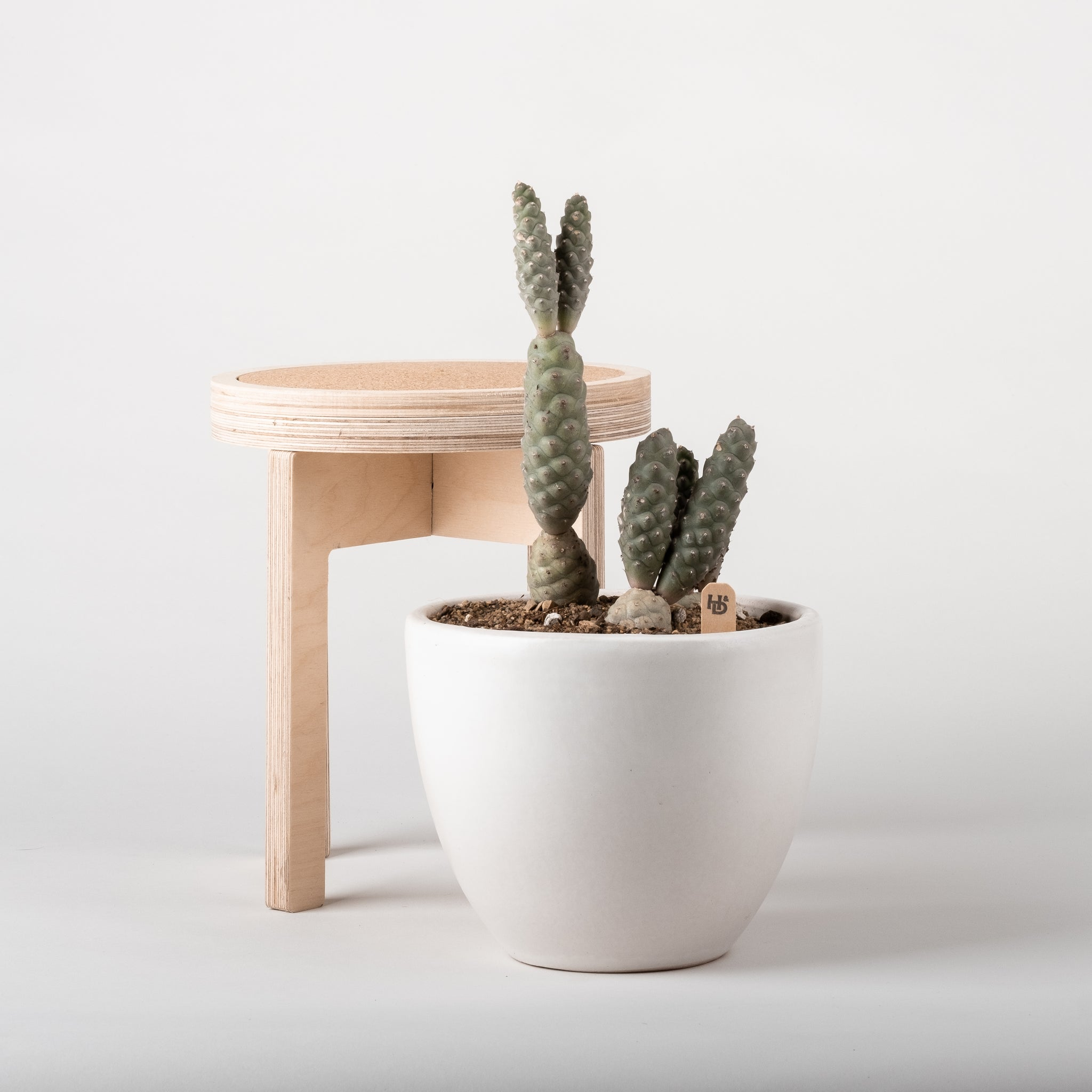 Birch + Cork Planter Stand