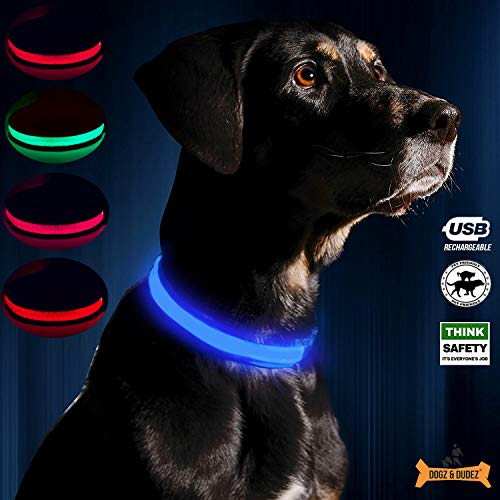 Dogz & Dudez USB Rechargeable LED Dog Collar with 5 Colours (Neon Blue, Medium) - Dogz & Dudez